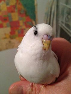 Pretty parakeet..Looks like it has eyelashes!