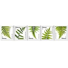 Amazon.com: USPS Ferns Forever Stamps - 20 Stamps: Toys & Games
