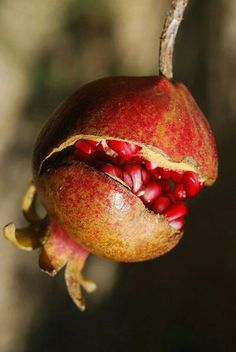 pomegranate is a round, thick-skinned fruit containing a mass of red seeds and a lot of juice pomegranate is split a little. Fruit Photography, Still Life Photography, Fruit And Veg, Fresh Fruit, Pomegranate Tattoo, Grenade, Still Life Photos, Fruit Displays, Juicy Fruit