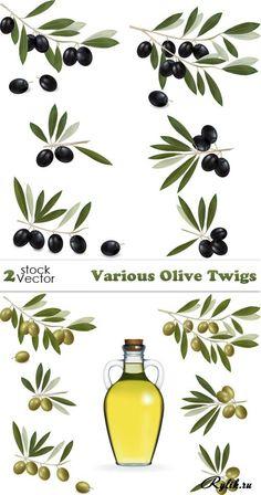 Оливковое масло, маслины, оливки - векторный клипарт. Olive Twigs