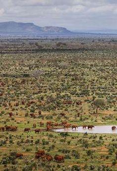 Red Elephants at Tsavo East National Park Kenya