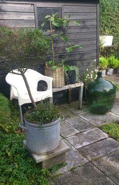 My garden in Sweden 198