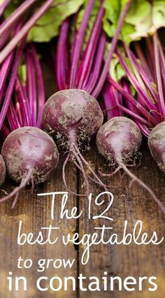 The 12 best ve ables to grow in containers Grow ve ables anywhere on patios and balconies You can grow a wide range of veg even in a small garden