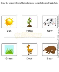 Food Chain Worksheet 14 - science Worksheets - grade-2 Worksheets