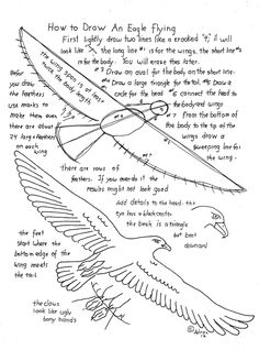 How To Draw A Flying Eagle. Worksheet And Lesson. Read the lesson at the blog: http://drawinglessonsfortheyoungartist.blogspot.com/2013/01/how-to-draw-flying-eagle-worksheet-and.html#