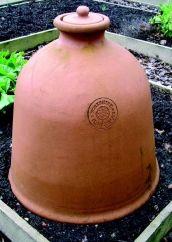 Forcing Rhubarb