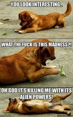 Attack Of The Funny Animals � 30 Pics