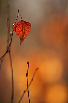 The Fall( until the last leaf has fallen ... that's a sad thought until Spring  arrives :)