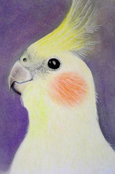 The Lutino Cockatiel