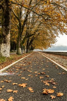 Ioannina lake at Autumn Seasons Of The Year, Time Of The Year, Wedding Couple Pictures, Greek Flowers, Forest Mountain, Tree Forest, Flowering Trees, Amazing Nature, Beautiful Landscapes
