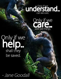 : Jane Goodall has dedicated her life for the chimpanzees - please dedicate a small part of your time to help everywhere you can. Jane Goodall, Primates, Mon Combat, Stop Animal Cruelty, Wildlife Conservation, Animal Welfare, Photo Quotes, Amazing Quotes, Animals Beautiful