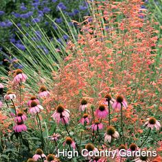 Summer Sanctuary Garden
