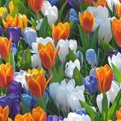 Kevätkarnevaali -lajitelma