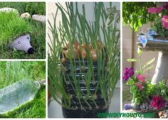 DIY plastová fľaša záhradné projekty a nápady [obsluhe Picture]