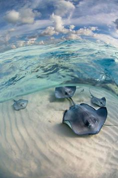 I like how the photographer didn't just take a picture above the water looking down on the animals. They got under the water and got a clearer photo. Under The Water, Under The Sea, Beautiful Creatures, Animals Beautiful, Cute Animals, Animals Sea, Majestic Animals, Beautiful Beautiful, Beautiful Places