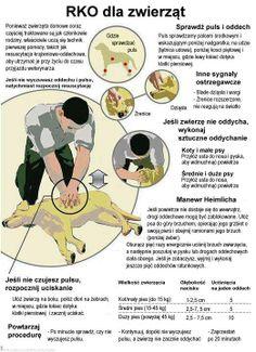 RKO dla zwierząt