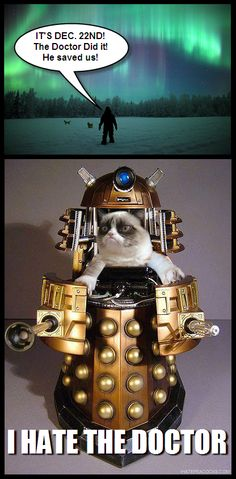 This explains so much! ~Grumpy cat ~Doctor who ~Dalek Dr Who, Chat Web, Serie Doctor, Doctor Who Funny, Pokemon, Image Manga, Dalek, Lol, Bad Wolf