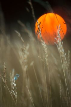 Butterfly Sunset, Czech Republic