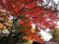 The colors of fall in Japan...