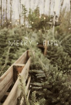 it is merry and bright, indeed. the season is bursting with the best holiday cheer and it is no doubt my favorite time of the year!