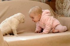 Little Golden Retriever & Baby Meeting Eye-to-Eye.
