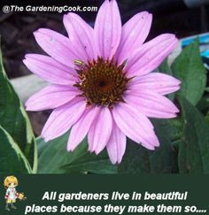 1000 images about gardening quotes inspiration on