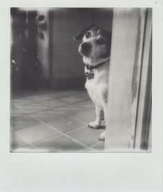 Tobi @ impossible project
