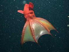 Deep Sea Creatures, Alien Creatures, Deep Sea Squid, Jellyfish Tentacles, Colossal Squid, Giant Isopod, Vampire Squid, Giant Squid, Monterey Bay Aquarium