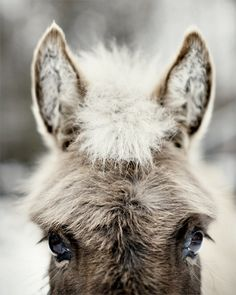 Sophia the Donkey - Fine Art animal photograph, gray donkey's face on Etsy, $35.00