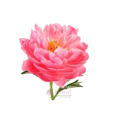 Peony Coral Charm Hawaiian - Sunset - Potomac Floral Wholesale