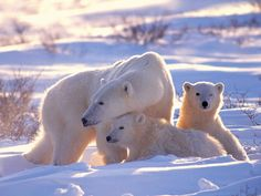 Beautiful Animal Pictures | PINteresting Pictures