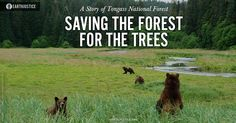 Alaska's Tongass National Forest is home to centuries-old trees and rivers flowing among thousands of islands. It is also the last forest where the fight continues to keep timber sales out of roadless areas.