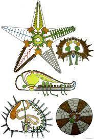 stekelhuidigen - De bouw van enkele Stekelhuidigen.
