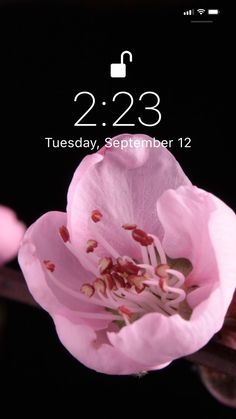 phone wall paper videos Flowers time lapse live wallpaper for your iPhone XS from Everpix Live Moving Wallpaper Iphone, Flower Iphone Wallpaper, Flower Background Wallpaper, Cute Wallpaper For Phone, Galaxy Wallpaper, Cool Live Wallpapers, Motion Wallpapers, Beautiful Wallpapers For Iphone, Beautiful Flowers Wallpapers