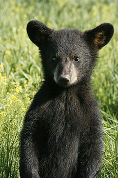 One of the cutest little bears I've ever seen.