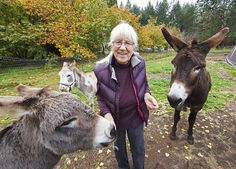 A Comox Valley woman provides forever homes for four rescued donkeys and a mule I Laughed, Give It To Me, My Love, Bed, Animals, Beautiful, Animales, Stream Bed, Animaux