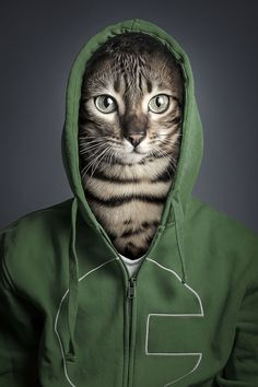I Dress Cats As Their Owners | Bored Panda