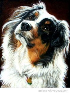 Australian Shepherd Dog--One of my most favorite breeds!