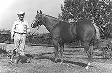 Cutter Bill, 1955-1982 Quarter Horse.