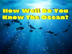 How Well Do You Know The Ocean? Find your next beach home at www.moveto386.com
