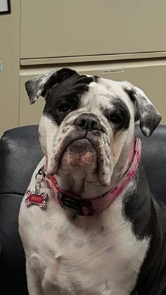 Roxy at 1 year old