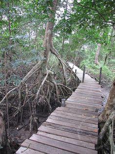PA Ilha do Marajó - Soure - Fazenda Araruna 0064 by Vida de Viajante, via Flickr