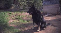 Un chien récompensé pour son dévouement envers son maître, victime d'un tragique accident - Héros - Wamiz