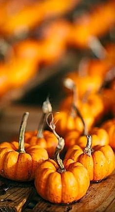 Mini pumpkins...AUTUM - FALL - LEAVES - THANKSGIVING - PUMPKINS - SWEATER WEATHER - COCOA - HOT CHOCOLATE - APPLES!