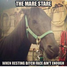 Only equestrians arent afraid to face that look - Horses Funny - Funny Horse Meme - - Only equestrians arent afraid to face that look The post Only equestrians arent afraid to face that look appeared first on Gag Dad. Funny Horse Memes, Funny Horse Pictures, Funny Horses, Cute Horses, Pretty Horses, Horse Love, Beautiful Horses, Horse Humor, Horse Girl
