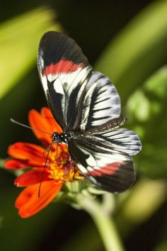 Butterfly Photo by Xavier Fernando Orozco — National Geographic Your Shot