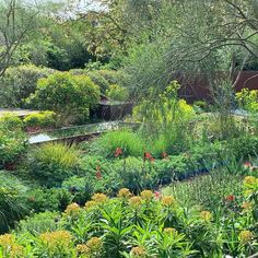 Tom Stuart-Smith (@tomstuartsmith) • Instagram photos and videos Tom Stuart Smith, Will Smith, Vineyard, Toms, Photo And Video, Videos, Garden, Plants, Photos