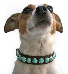 Single Row Turquoise on Chocolate Leather Dog Collar Studded Collar, Studded Leather, Calf Leather, Leather Dog Collars, Pet Collars, Magnificent Mutts, Mans Best Friend, Leather Jewelry, Puppy Love