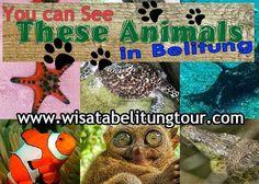 """""""Pulau Belitung tidak hanya menjadi surga bagi pecinta wisata bahari yang senang akan keindahan panorama pantai. Di beberapa destinasi, Wisata Belitung Imaji Tour akan mengajak anda untuk melihat hewan-hewan unik yang bisa dilihat di dalam hutan, dalam laut, tentu saja masih dalam situasi yang terkendali."""