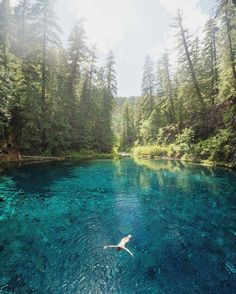Willamette National Forest, Springfield, Oregon,